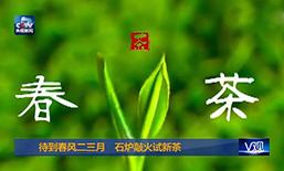春风二三月,桐城新茶探出头